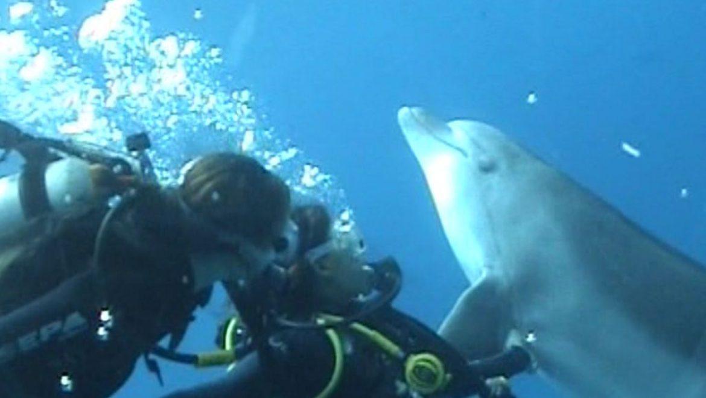 לצלול עם דולפינים